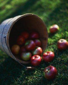 Apples Falling out of Bucket